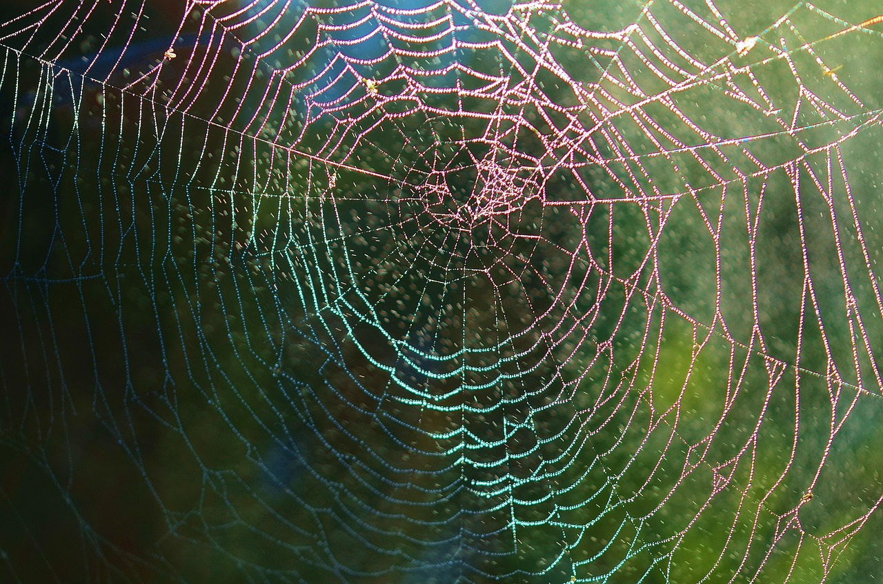 rainbow_spiderweb